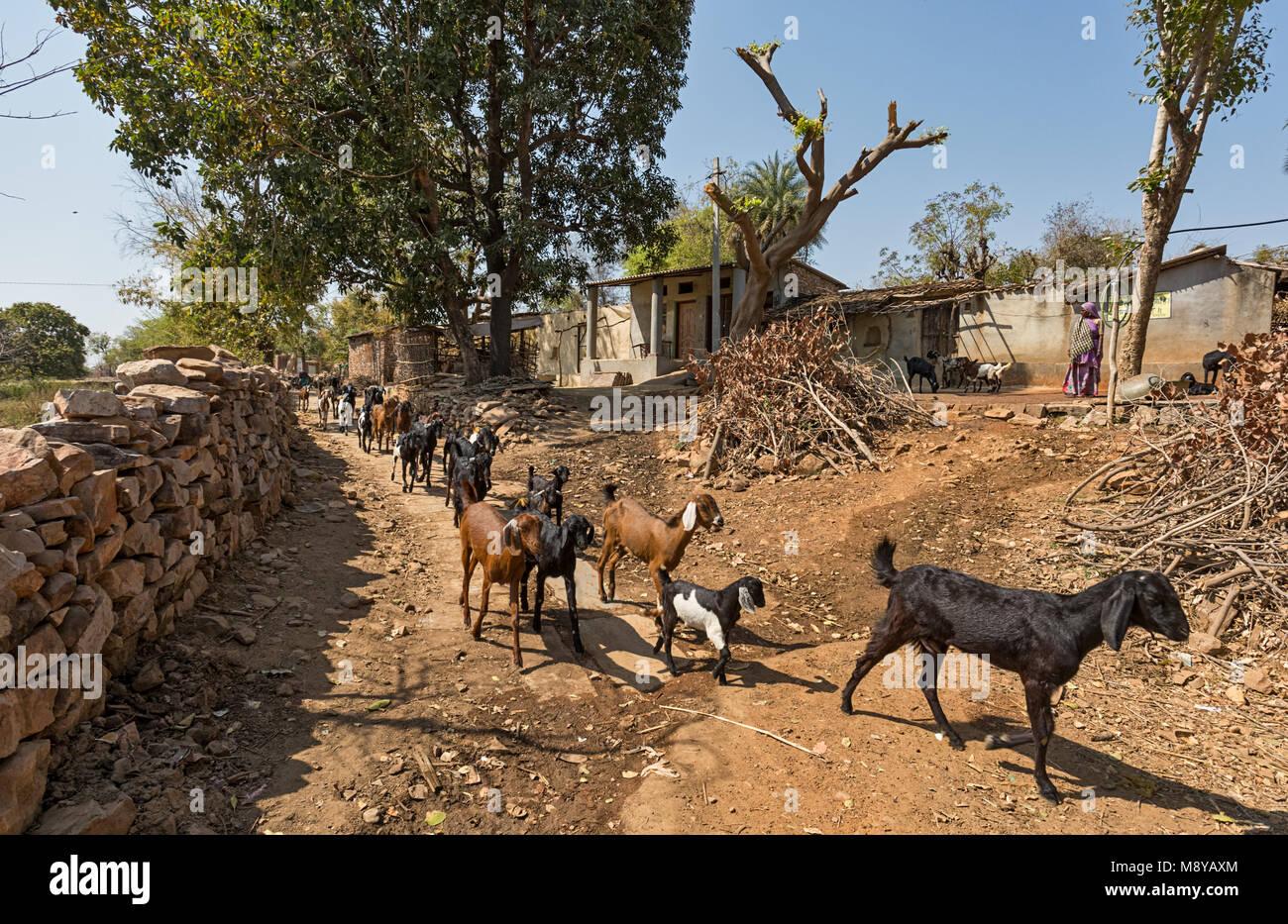 Nimbahera - Rajasthan, India Immagini Stock