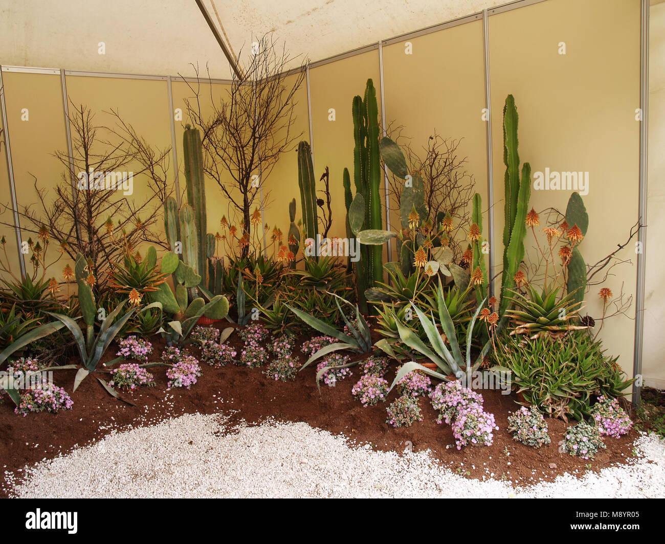 Piante Grasse Piccole Prezzi collezione di cactus e piante grasse in mostra foto stock