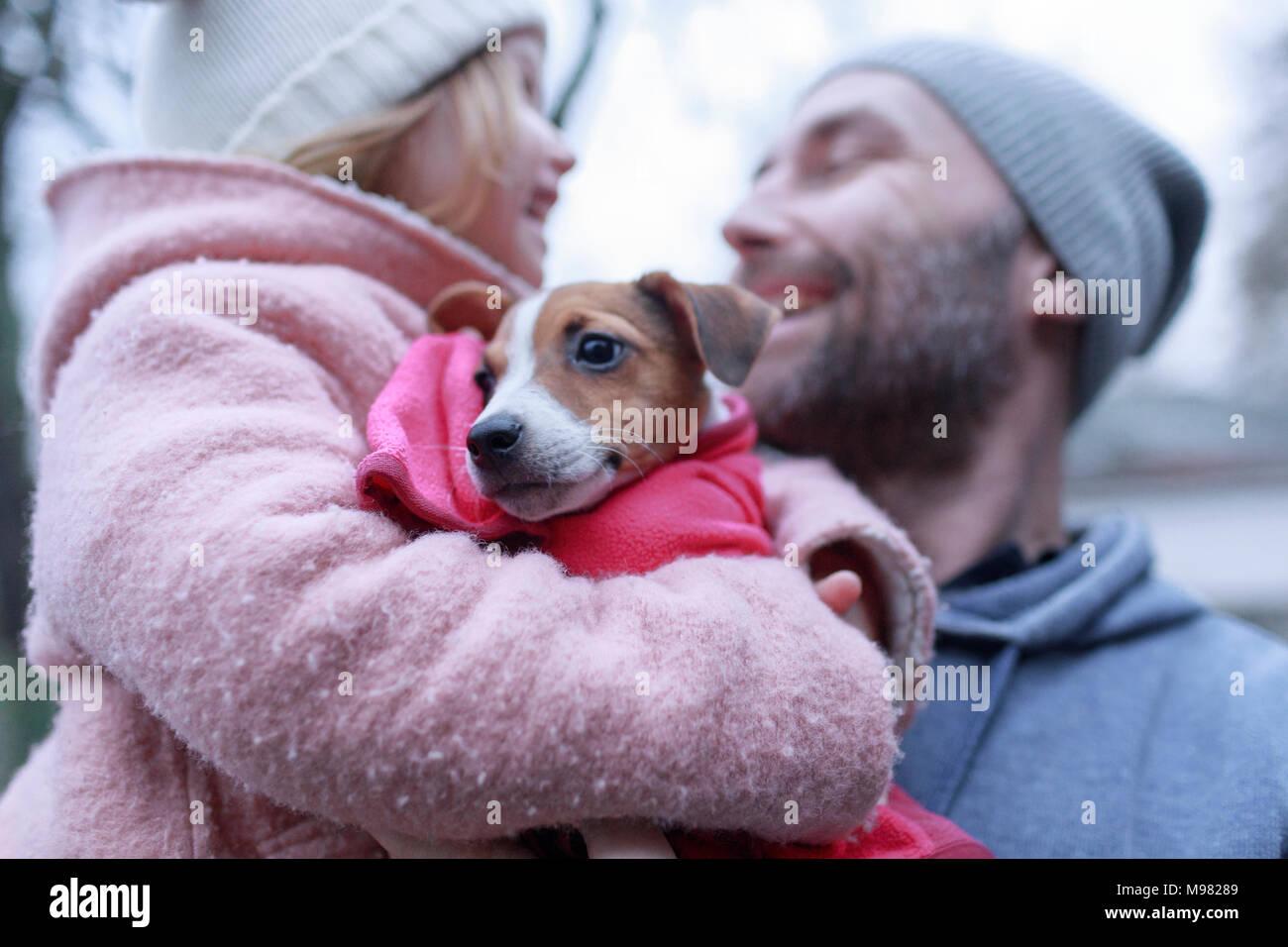 Ritratto Di Jack Russel Terrier Cucciolo Foto Immagine Stock