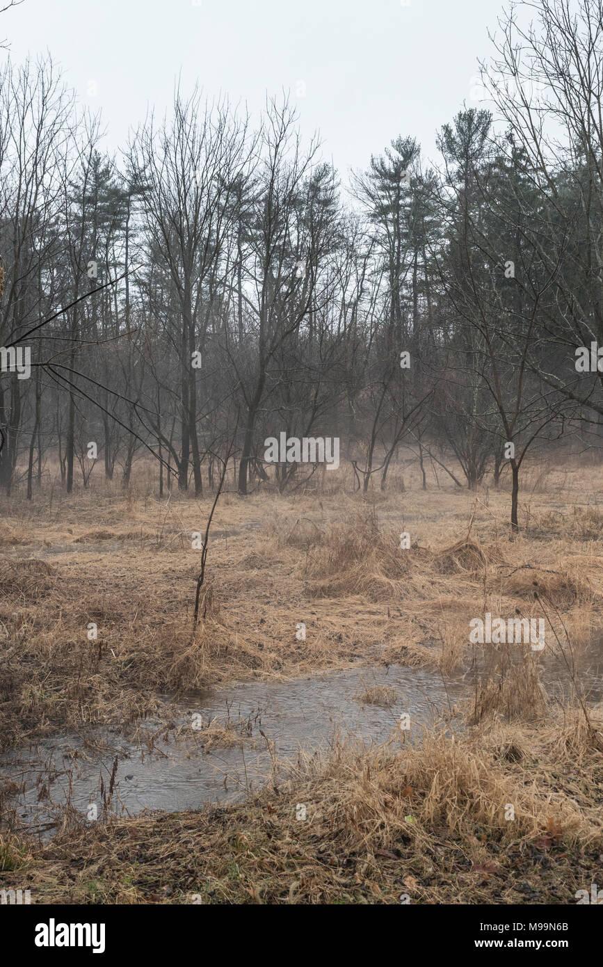 Campo inondato con erba alta appiattito da acqua e alberi in background Immagini Stock