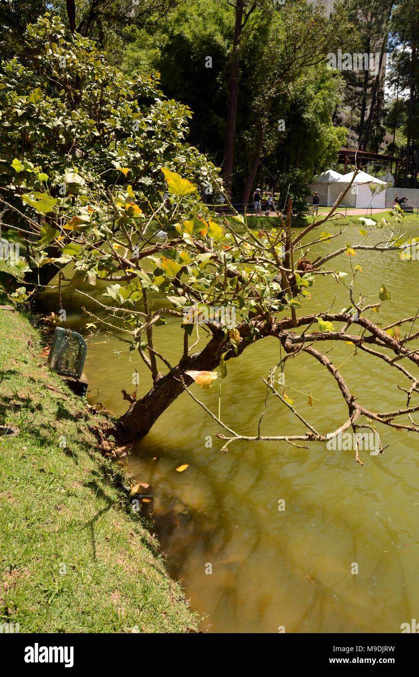 Árvore crescendo dentro do lago Immagini Stock