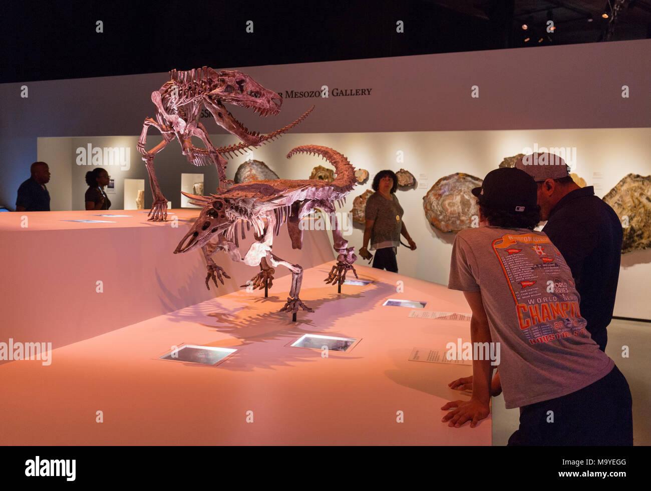 I visitatori del museo guardando i dinosauri, Houston Museo di Scienza Naturale, Houston, Texas, Stati Uniti d'America Immagini Stock