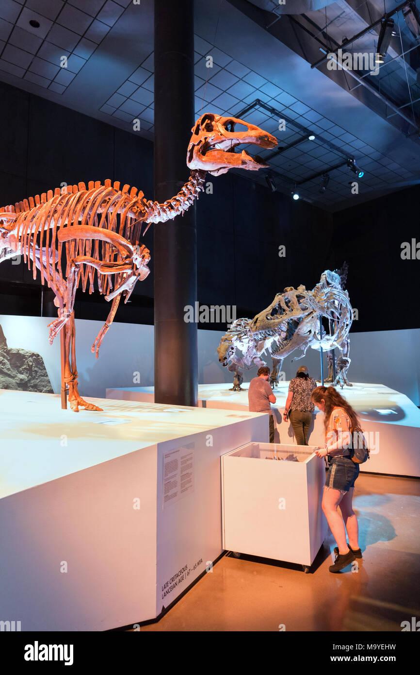 Le persone in cerca di fossili di dinosauro, Houston Museo di Scienza Naturale, Houston, Texas, Stati Uniti d'America Immagini Stock