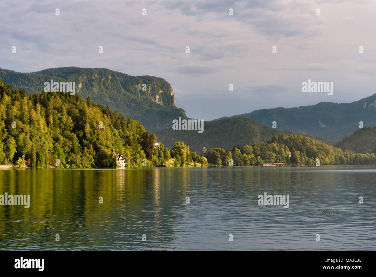 La Slovenia, Bled, foresta sul lungolago Immagini Stock