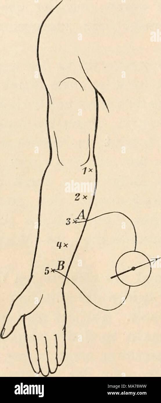 Ausgezeichnet Untere Anatomie Beinsehne Fotos - Anatomie Ideen ...