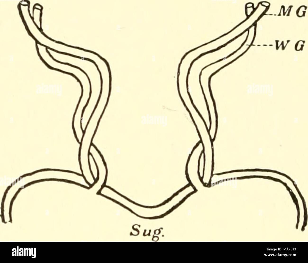 Berühmt Vergleichende Anatomie Definition Zeitgenössisch - Anatomie ...