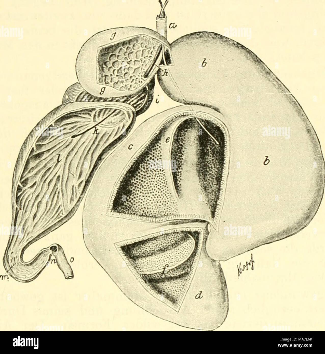 Ausgezeichnet Stirnbein Anatomie Ideen - Anatomie Ideen - finotti.info