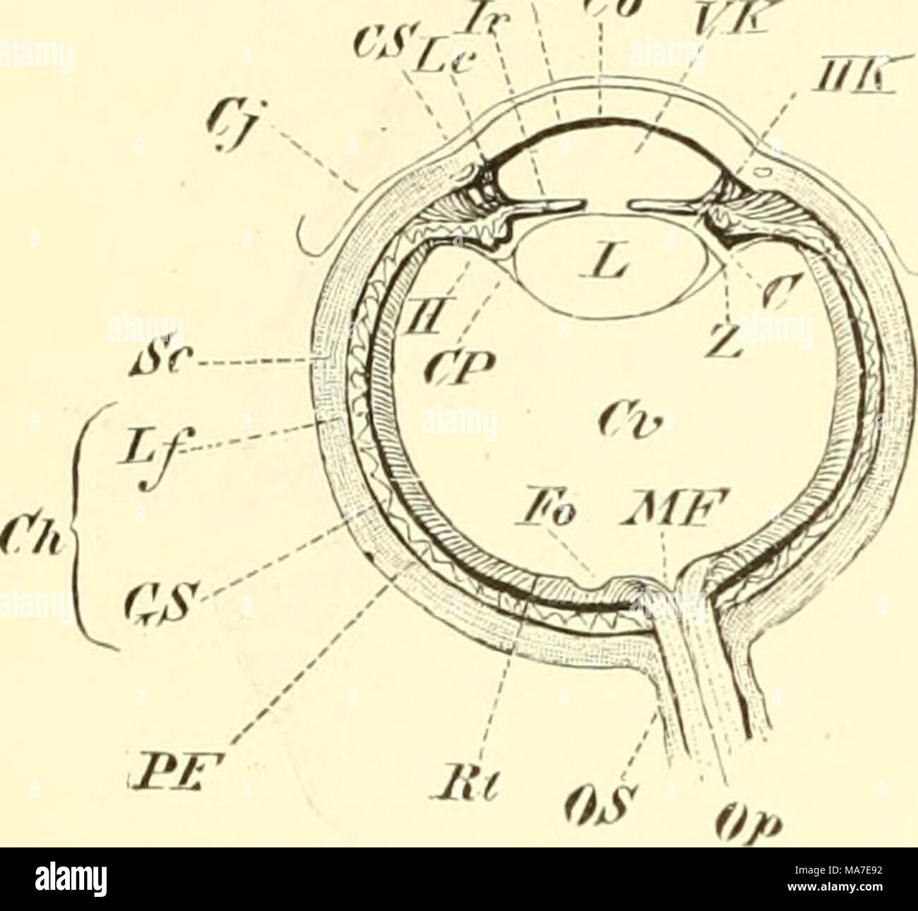 Schön Detailliertes Auge Anatomie Fotos - Anatomie Ideen - finotti.info