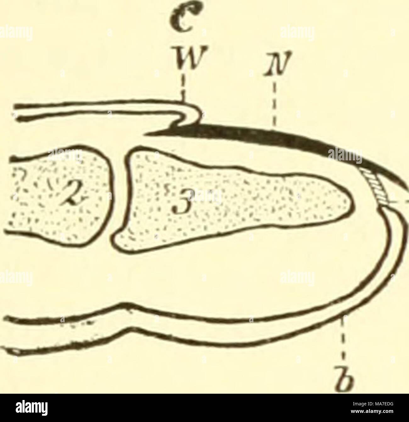 Wunderbar Wirbeltiere Vergleichende Anatomie Funktion Evolution ...