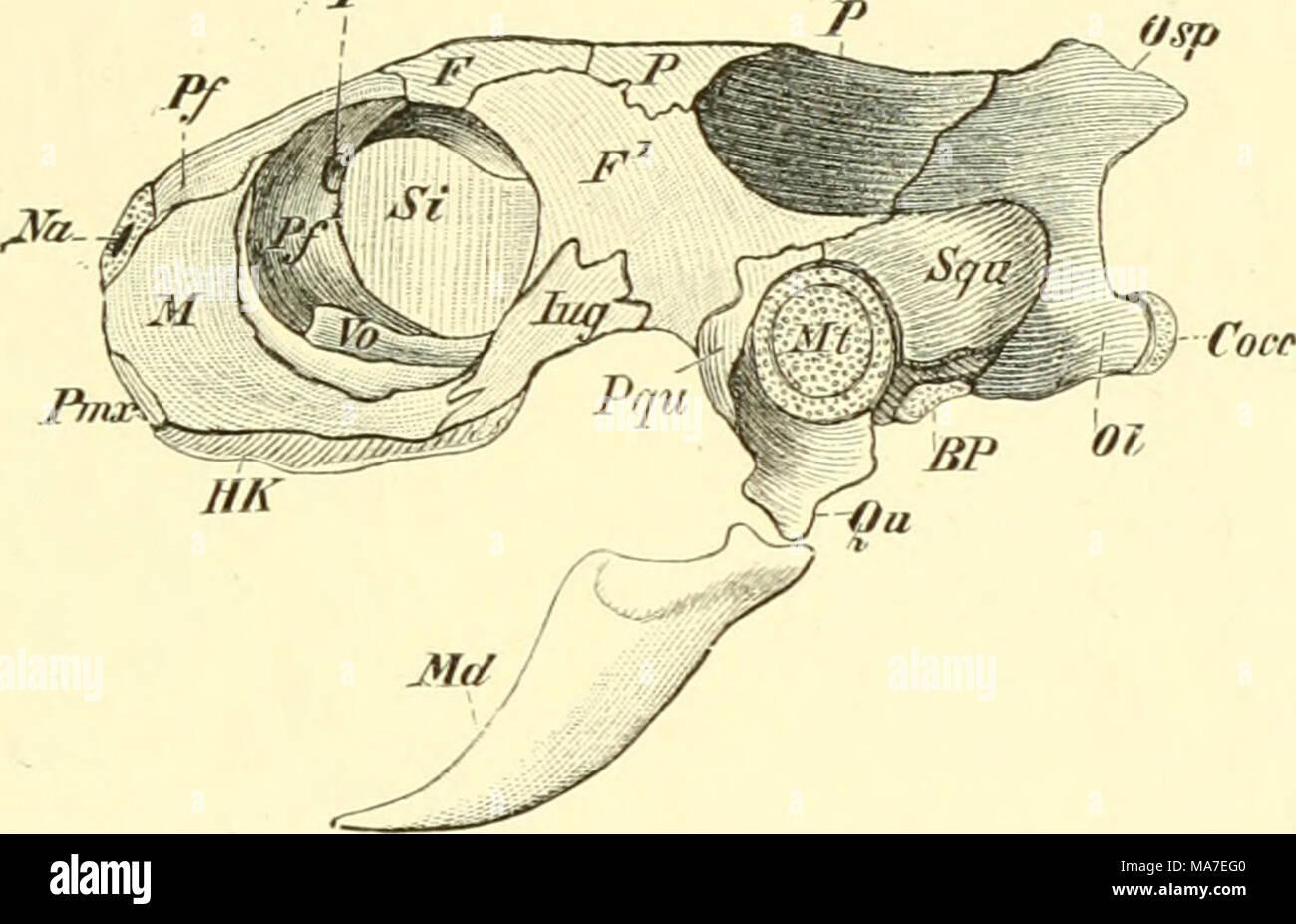 Atemberaubend Wirbeltiere Vergleichende Anatomie Fotos - Anatomie ...