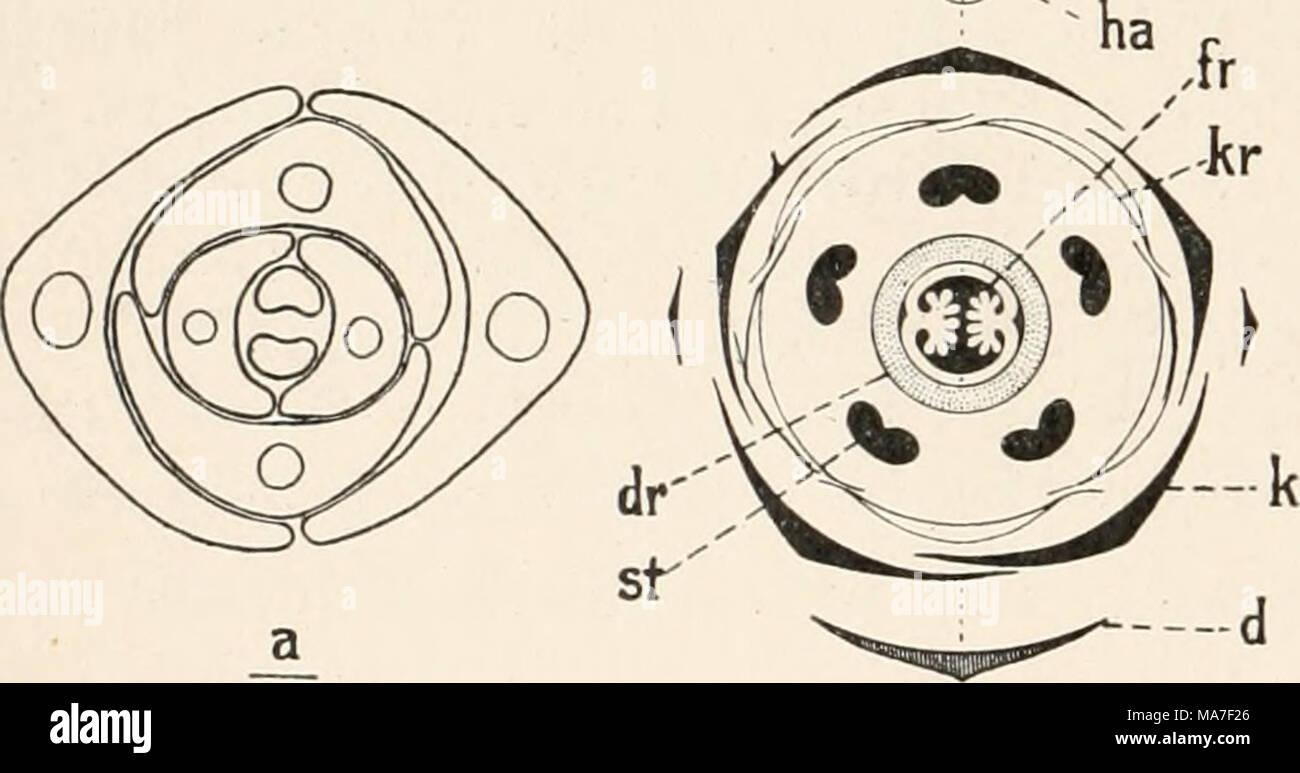 Einführung In Die Biologie Fig 8 Un Querschnitt Einer