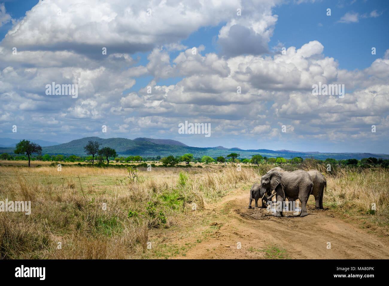 Safari in Tanzania, Viaggio in Africa Immagini Stock