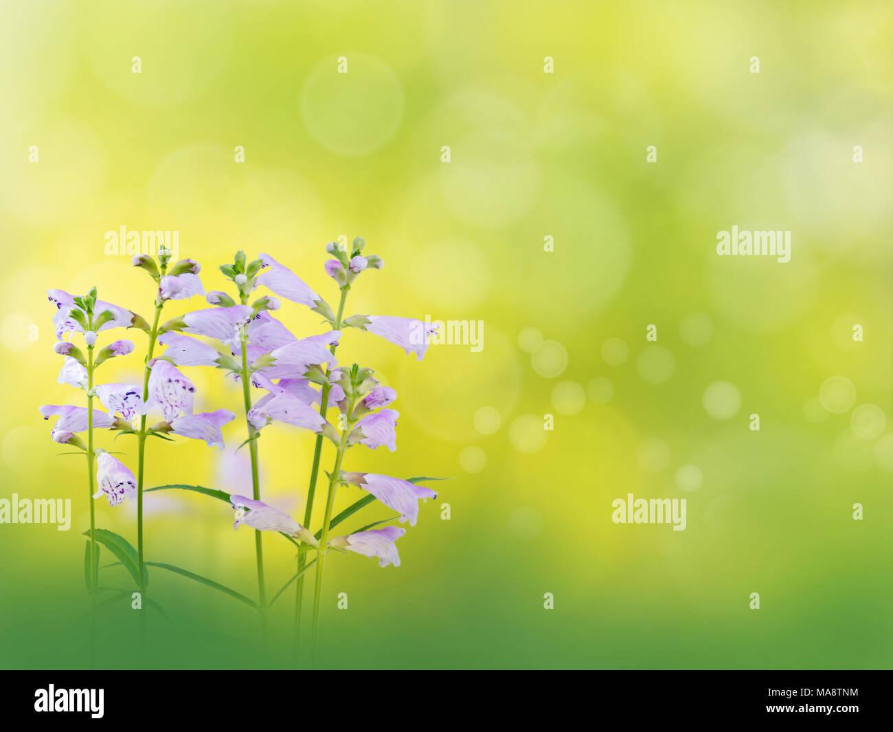 Bella Luce Fiori Viola In Estate Il Giardino Sfocata Sfondodesktop