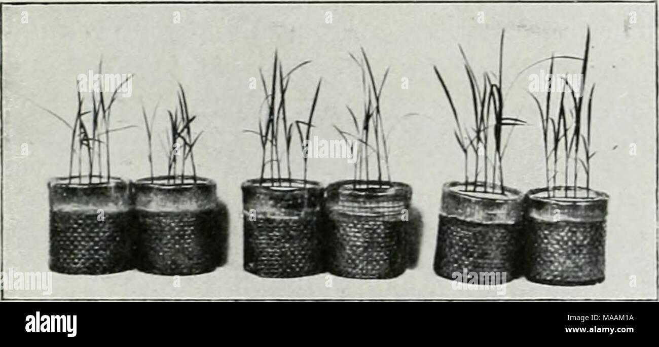 . Il dott. K.W. van Gorkom's Oost-Indische culture. Opnieuw uitg. onder redactie van H.C. Prinsen Geerligs. [Porta J.P. van der Stock et al.] . l'iü. 16. (;E]iaraffineerilc mandjes incontrato rijst. van rijst (ladangbouwl op dezen grond proefnemingen meteen fosforo- zuurbemesting zijn aan te raden. De geringe afmeting der mandjes werkt niet storend op de uitkomst, desidera de plantjes zijn nog te klein, om in den korten tijd dat de proet duurt van plaatsgebrek ultimo te ondervinden; rijstplantjes, die onder dezelfde omstandigheden in den vollen grond groeiden, hebben dan nog ongeveer dezelfde afmeting. Princi Immagini Stock