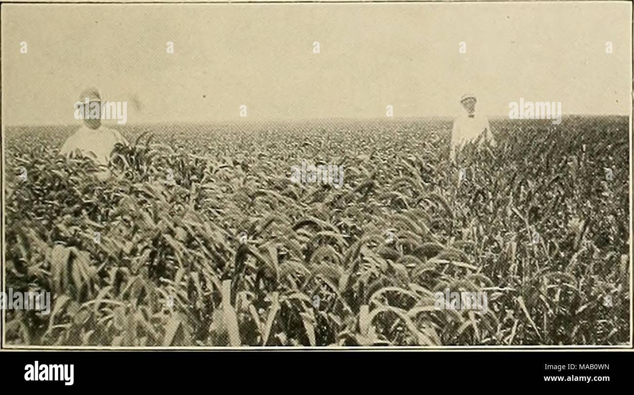 best sneakers 788aa 86c14 Terra asciutta agricoltura del sud-ovest .. . Miglio di ...