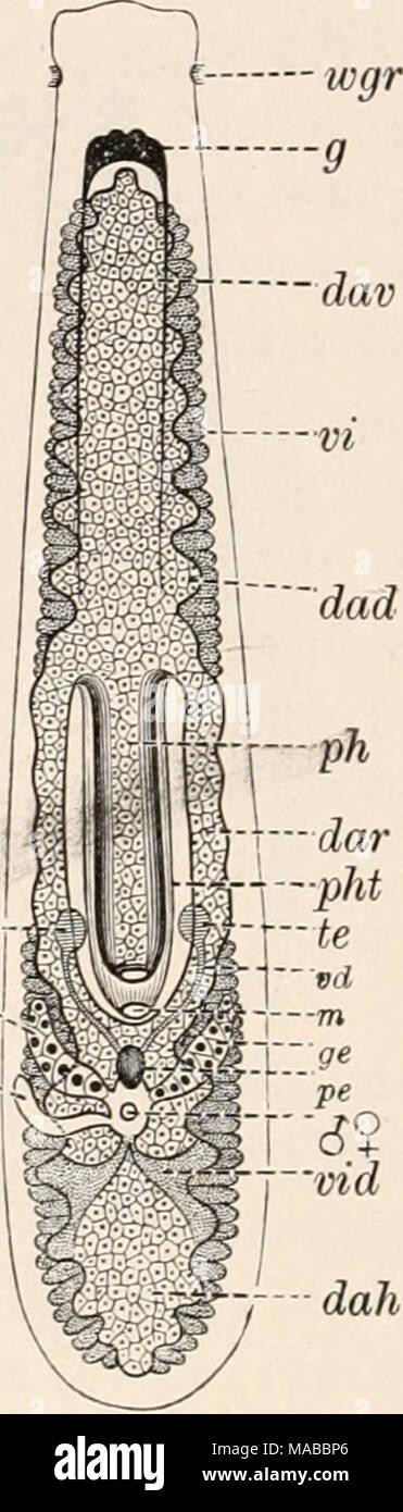 Gemütlich Anatomie Und Physiologie Des Mundes Zeitgenössisch ...