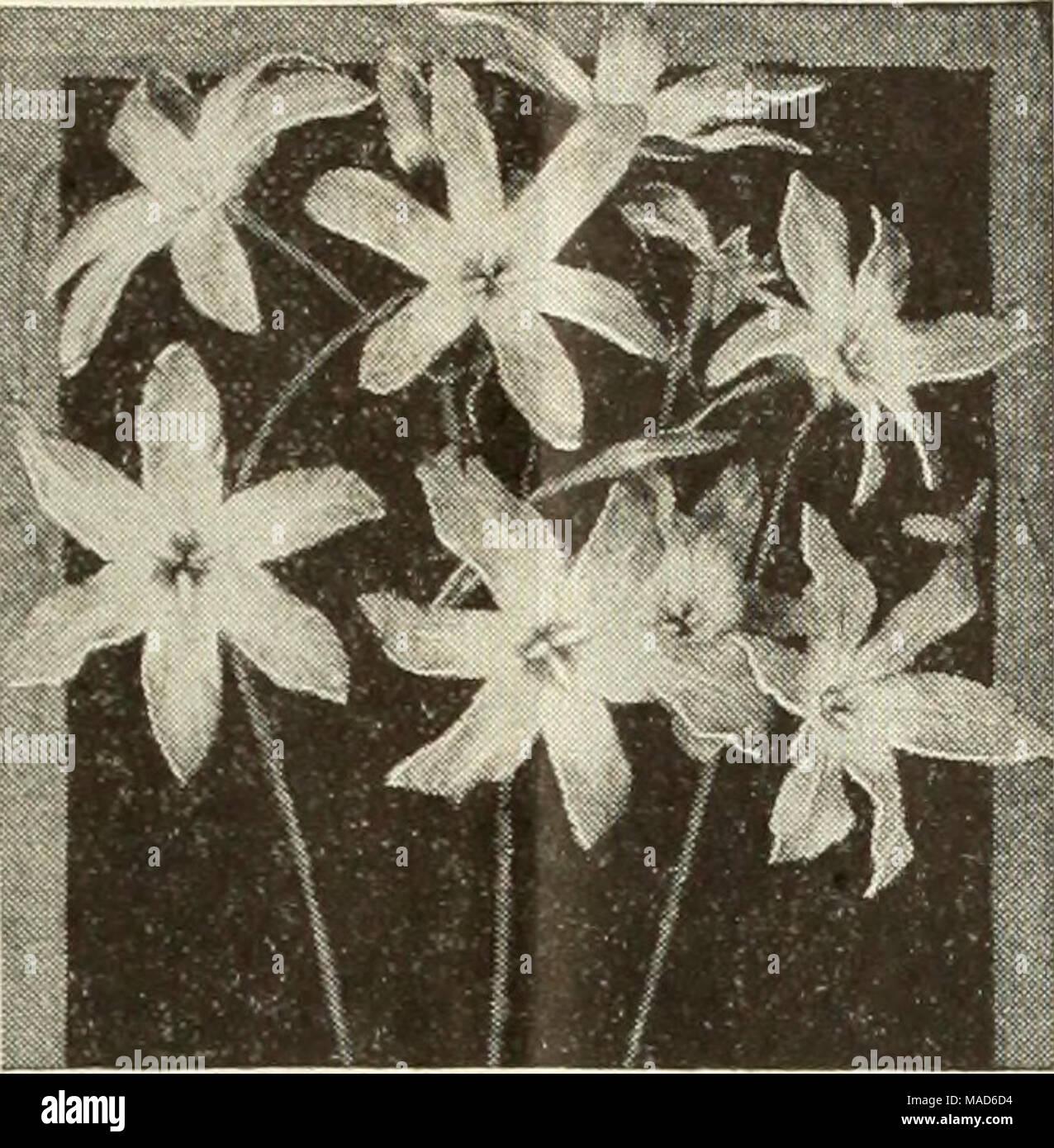 Che Cosa Sono I Bulbi dreer semi di piante bulbi per la piantagione di estate