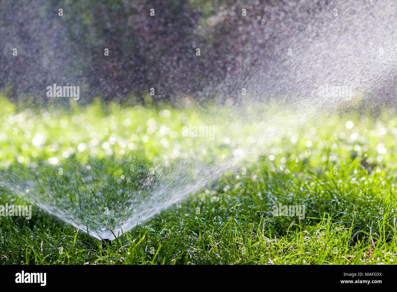 Lawn Sprinkler Acqua Di Spruzzatura Di Acqua Su Erba In Giardino In Un  Caldo Giorno Du0027estate. Innaffiamento Automatico Prati. Il Giardinaggio E  Concetto Di ...