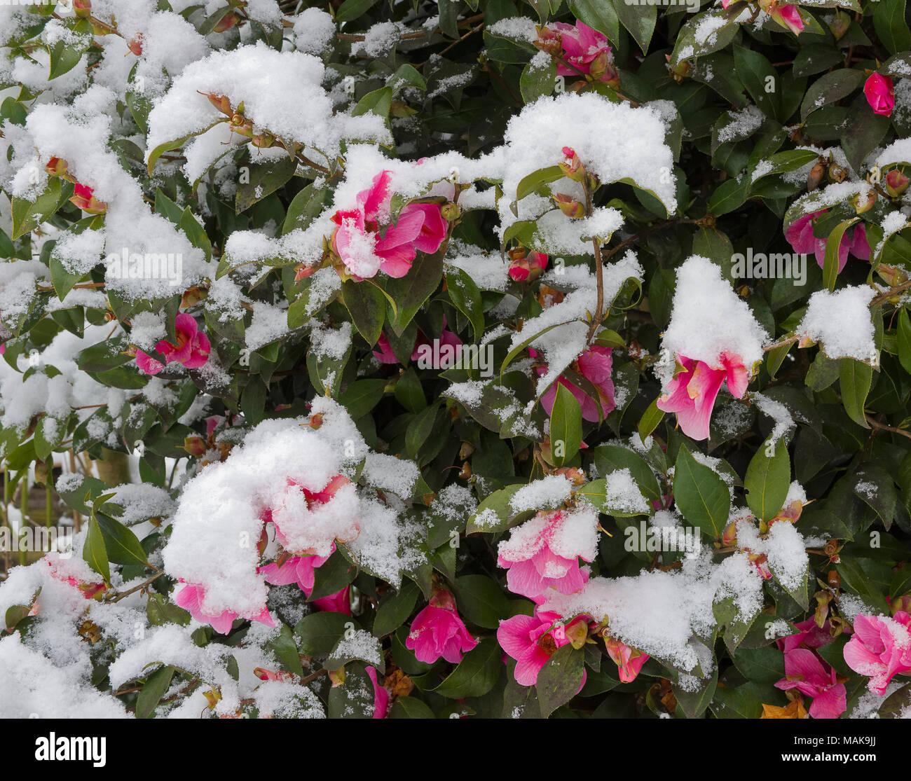 Fiori Arbusto Primavera Rosa Fucsia: Fiori ad uncinetto in giallo viola rosa e fucsia. Il mondo ...