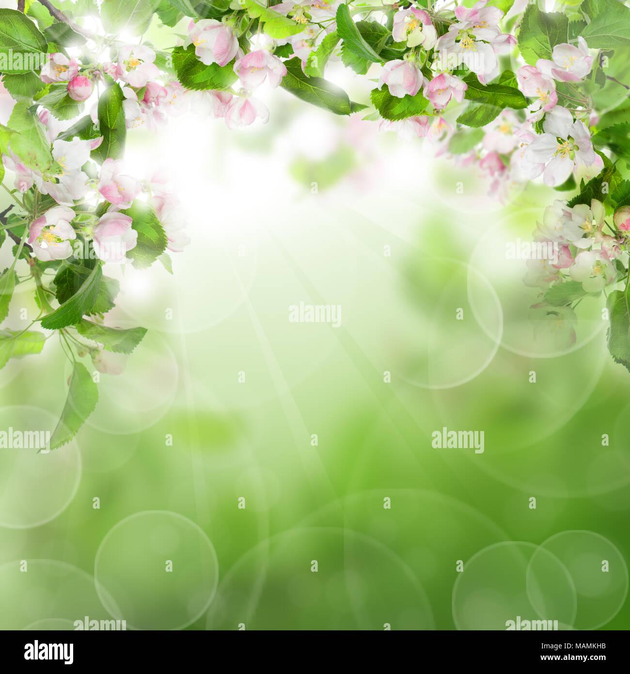 Abstract Sfondo Verde Con Fiori Di Colore Bianco Il Verde Delle