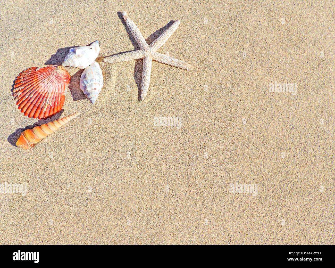 Sfondo Di Spiaggia Con Sabbia E Conchiglie Di Mare Stelle Marine E