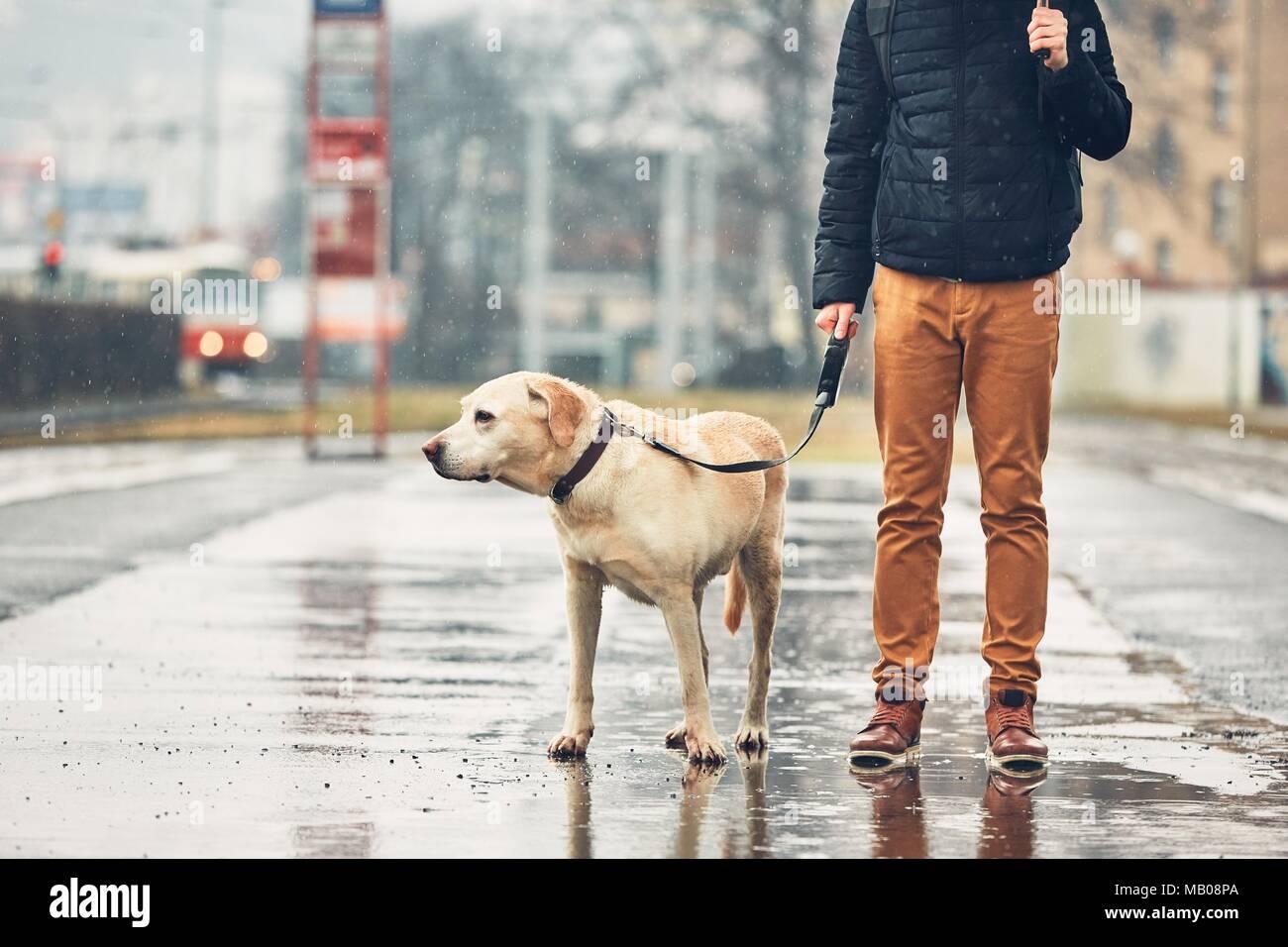 Fosche previsioni in città. L'uomo con il suo cane (labrador retriever) camminando sotto la pioggia sulla strada. Praga, Repubblica Ceca. Immagini Stock