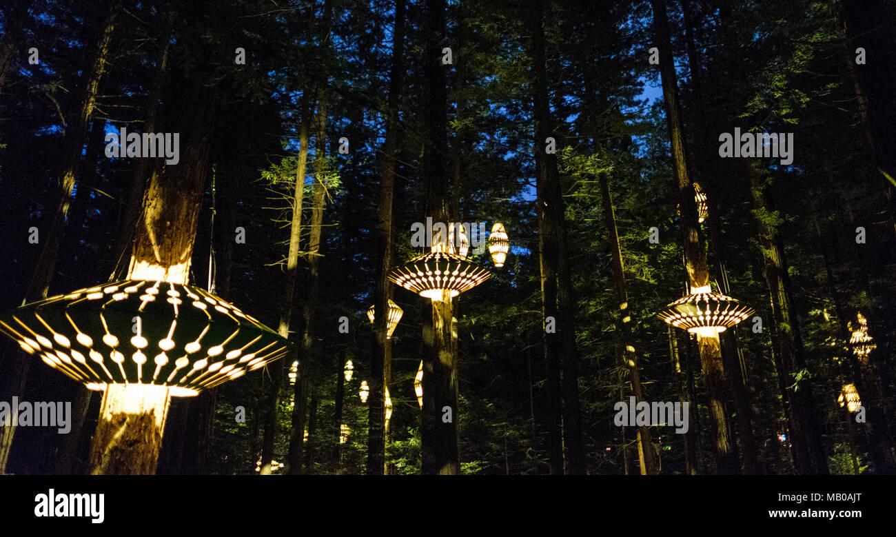 Rotorua nuova zelanda novembre illuminazione per