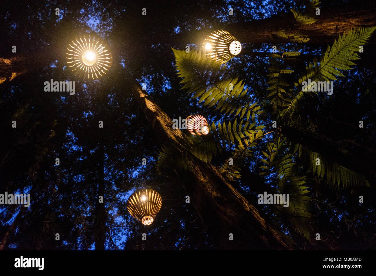 David trubridge design immagini david trubridge design fotos
