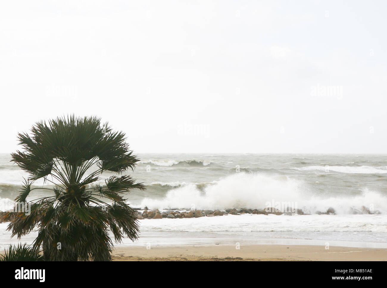 Palm tree durante una tempesta di mare, Santa Severa, Italia Immagini Stock