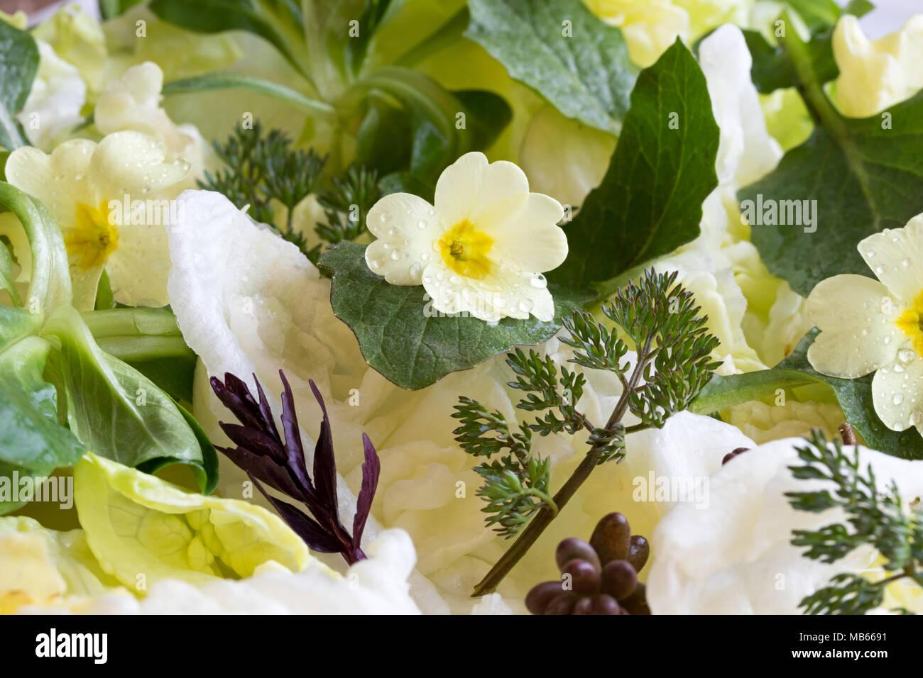 Fiori E Piante Commestibili dettaglio di una molla con insalata di primula fiori