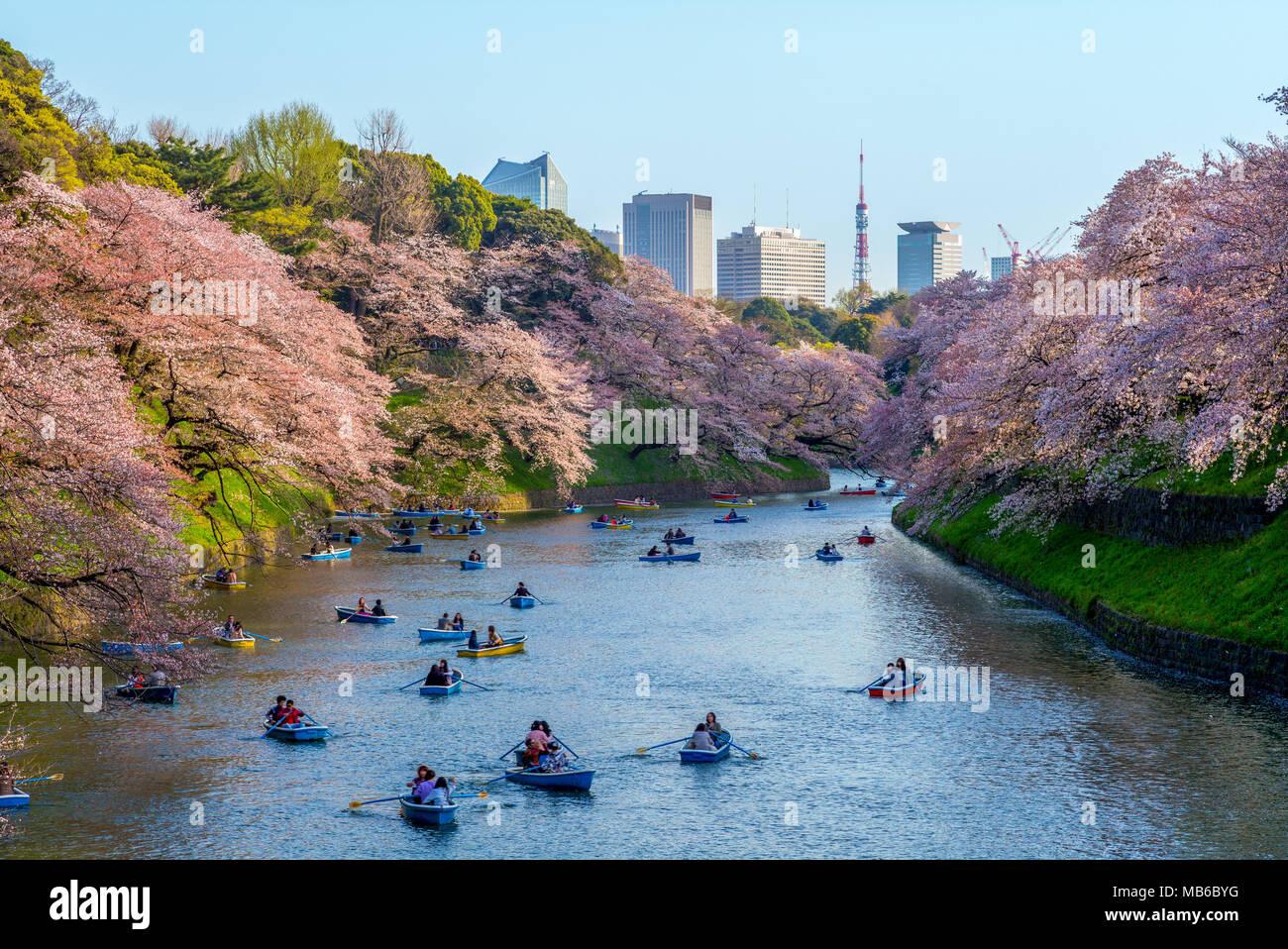 Fiore di Ciliegio a chidori ga fuchi, Tokyo, Giappone Immagini Stock