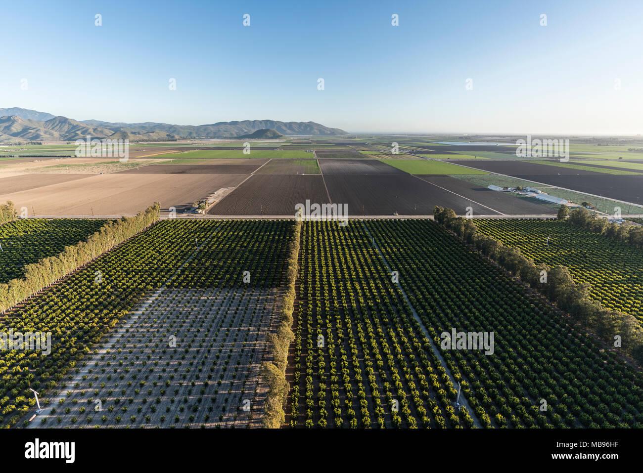 Vista aerea di agrumeti e costiere di campi di fattoria vicino a Camarillo in Ventura County, California. Immagini Stock
