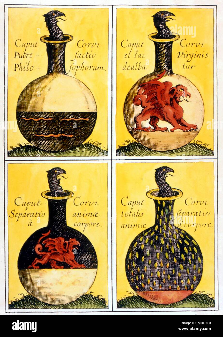 Alchimia - Testa del corvo - Quattro simbolico piastre alchemico che descrivono i processi nella produzione della pietra. La testa del Corvo e il Red Lion. Da 'Anatomia Auri' da J. D. Mylius, 1628 Immagini Stock