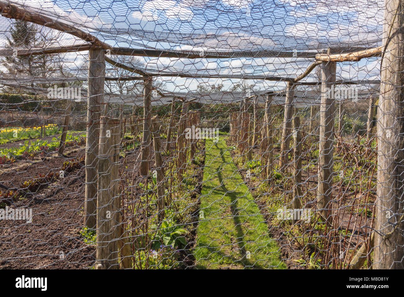 I giardini di Great Dixter all'inizio stagione primaverile, pochi visitatori e i giardini sono molto architectural senza una nuova crescita. La gabbia di frutta è molto strutturato in bassa sun, Northiam, East Sussex, Regno Unito Immagini Stock