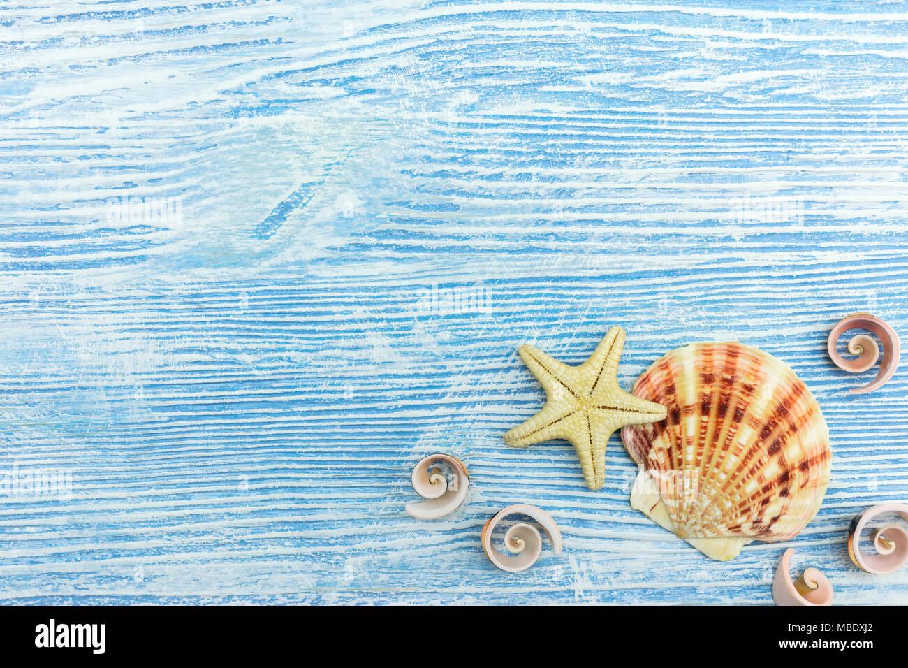 Tema Marino Background Conchiglie Di Mare Su Blu Malandata Di