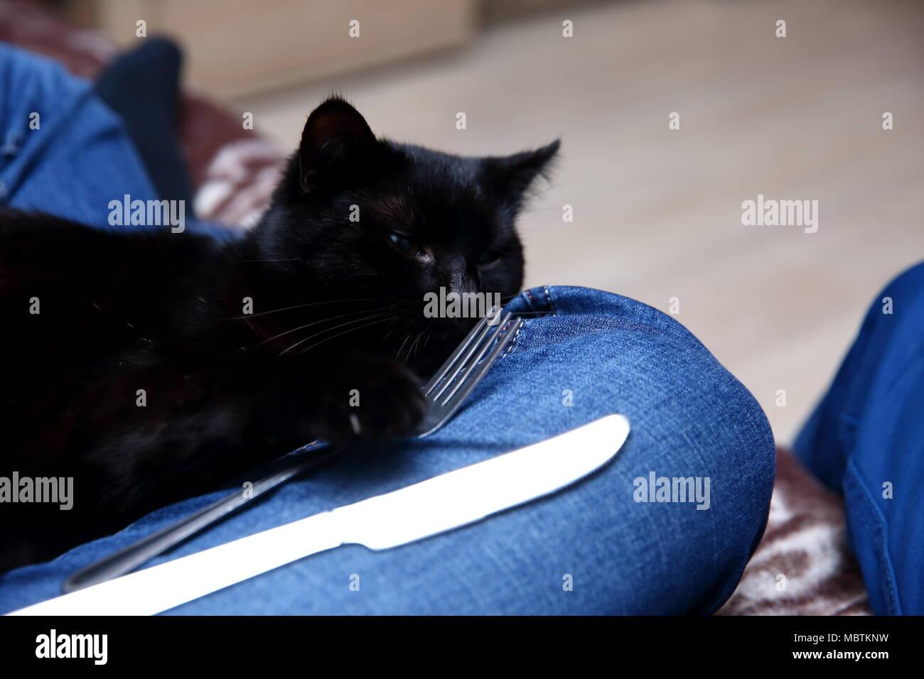 nero micio mangiare nero micio figa stretta ragazze video di sesso