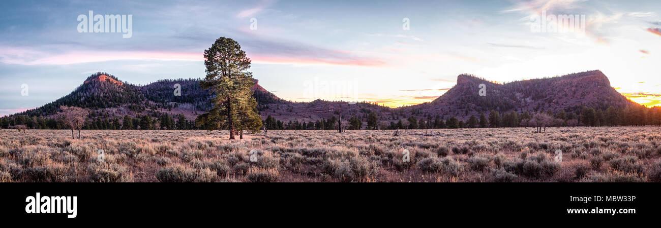Vista panoramica di orsi orecchie monumento nazionale nel sud dello Utah in golden, nel tardo pomeriggio la luce del sole. Immagini Stock