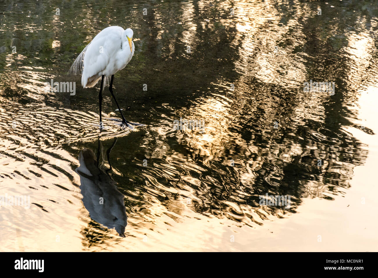 grande uccello bianco trash Gheto nero porno