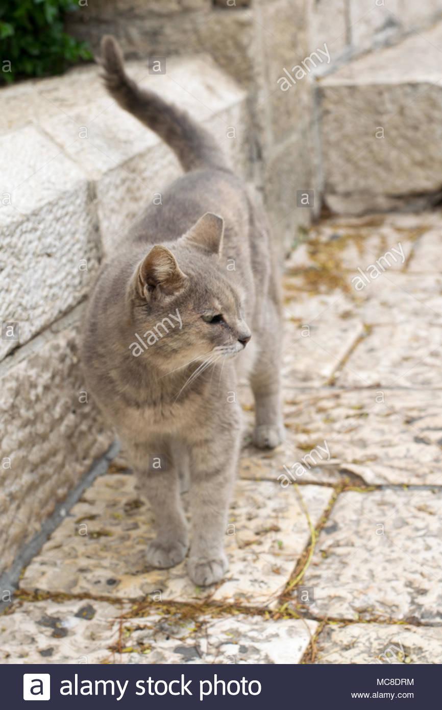 Gatto sulla strada Foto Stock