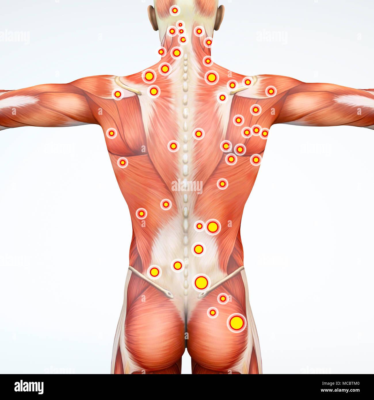 Moderno Anatomía Rata 3d Friso - Imágenes de Anatomía Humana ...
