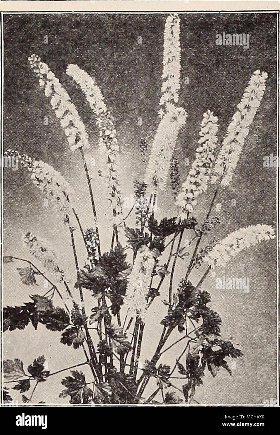 Fiori da piantare ad agosto le cime di rapa in campo with for Fiori di agosto