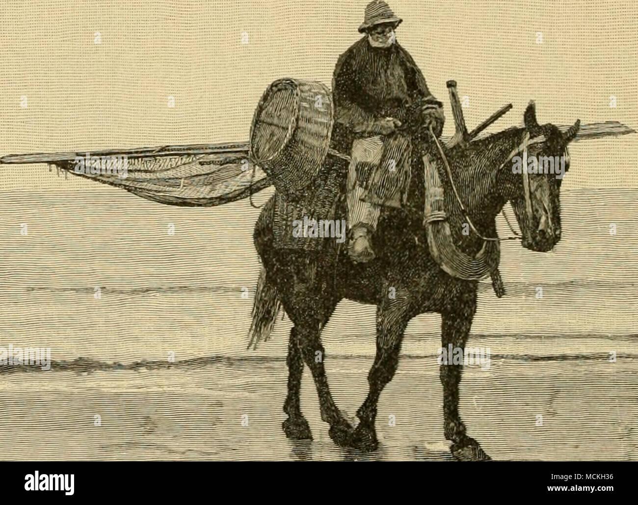 Pescatore belga del cavallo della buona come è il cavallo la memoria 48d739352d3f