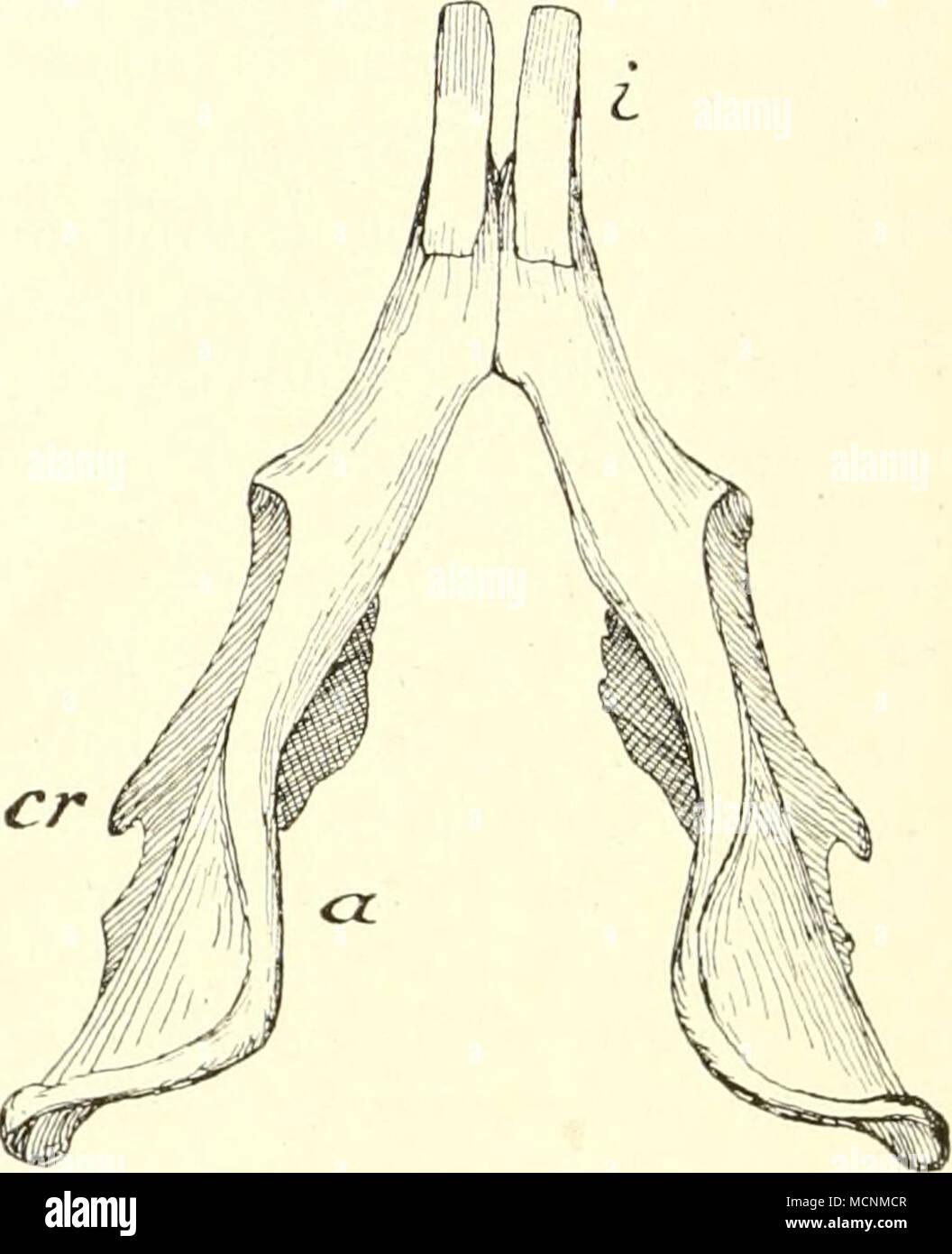 Ungewöhnlich Brustbeins Bild Bilder - Menschliche Anatomie Bilder ...