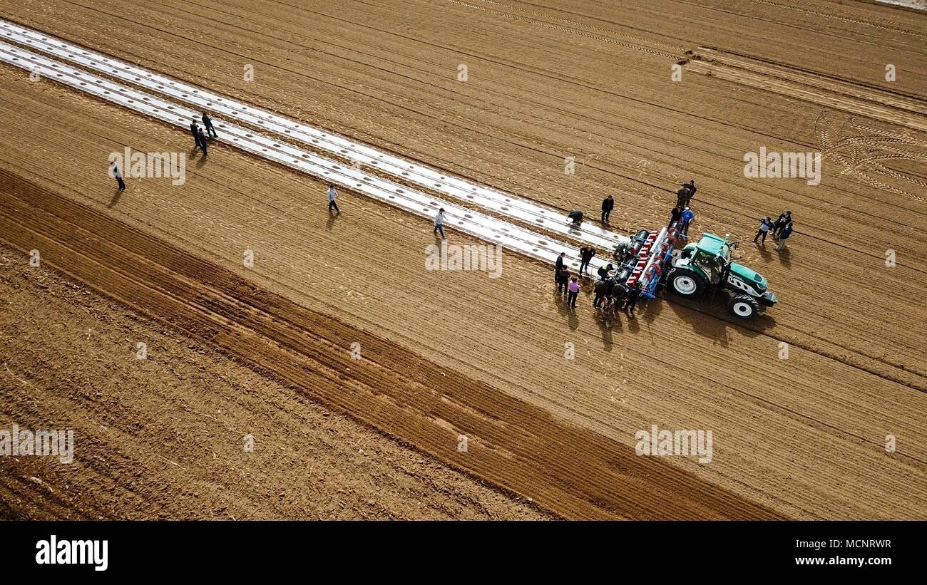 (180417) -- Pechino, 17 aprile 2018 (Xinhua) -- foto aerea adottate il 23 marzo 2018 mostra un auto-guida del trattore la semina di semi di cotone nel campo a Yaha township di Kuqa County, a nord-ovest della Cina di Xinjiang Uygur Regione autonoma. La Cina del PIL ha raggiunto 19,88 miliardi di yuan (circa 3,2 trilioni di dollari USA) nei primi tre mesi del 2018, 6,8 per cento anno su anno a prezzi comparabili, secondo l'Ufficio Nazionale di Statistica (NBS). (Xinhua/Hu Huhu) (lb) Immagini Stock