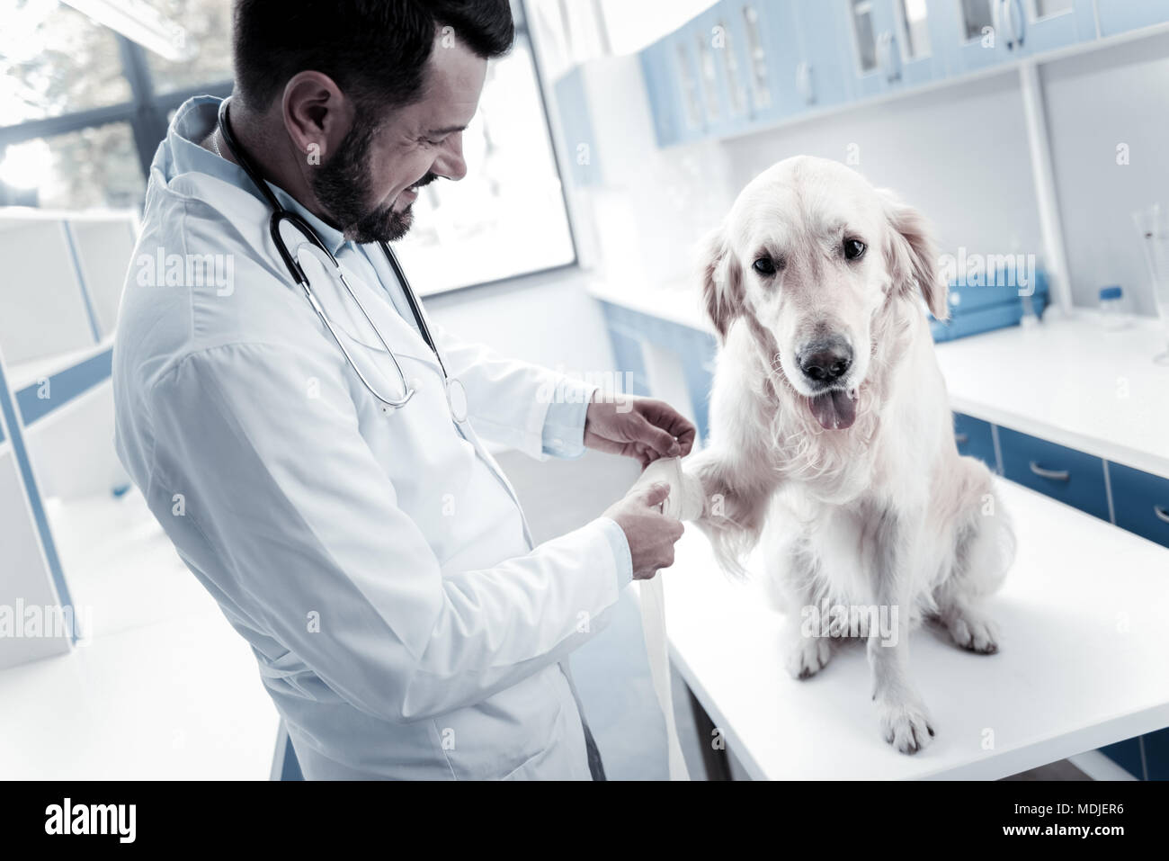 Nizza allegro medico tenendo una zampa di cani Immagini Stock