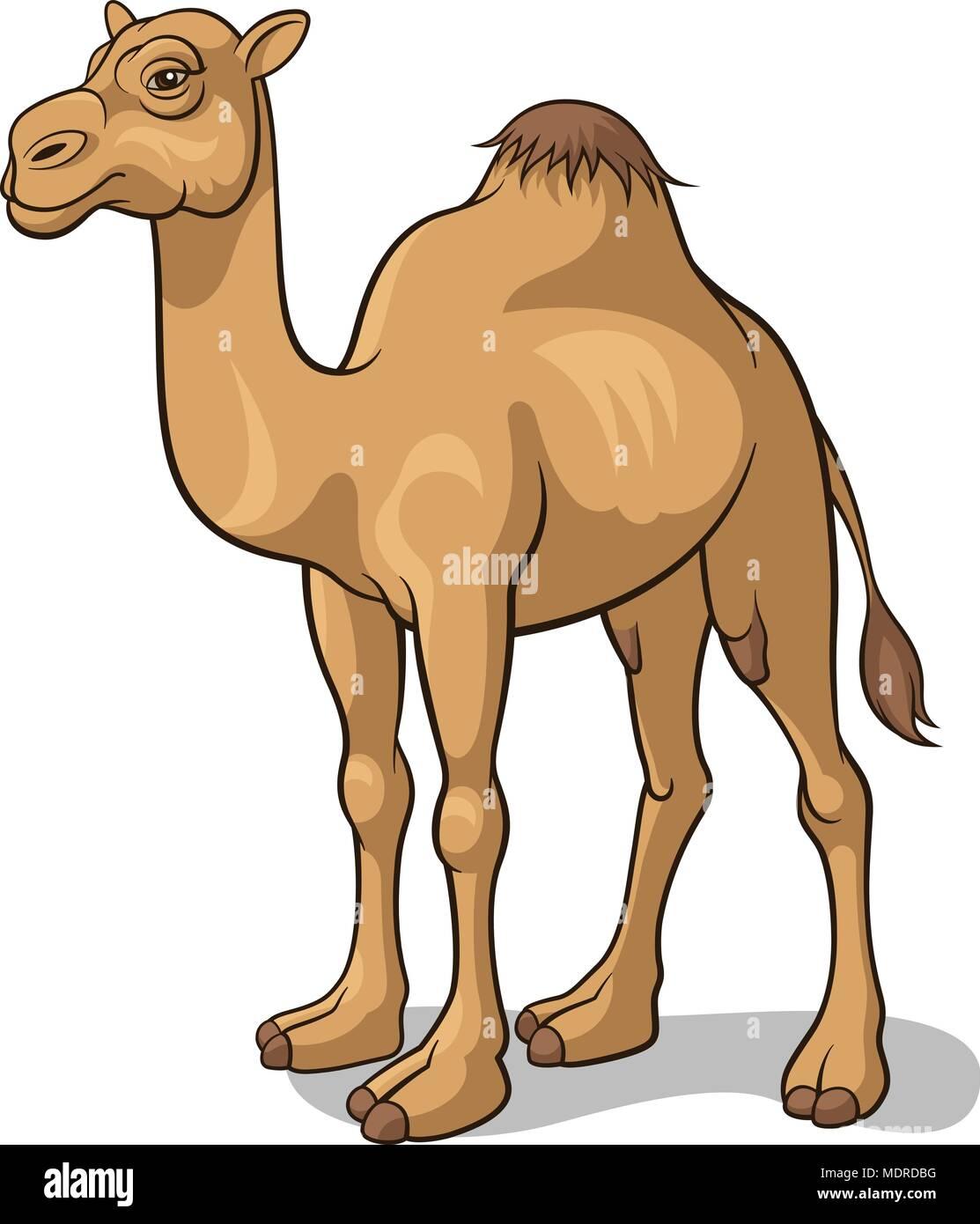 Cartoon camel isolato su bianco, illustrazione vettoriale Immagini Stock