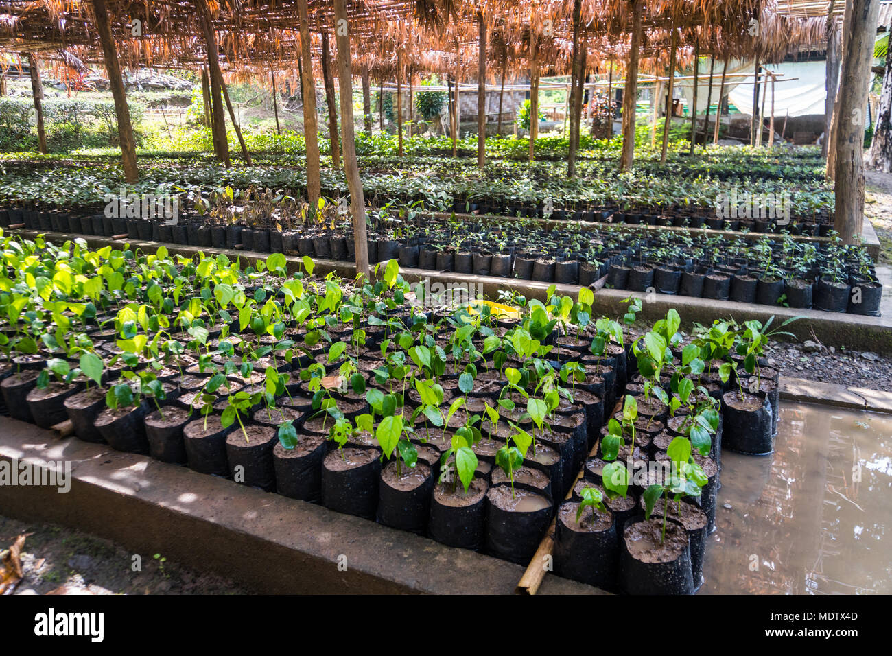 Alberi da giardino con fiori download by tablet desktop for Alberi da giardino con fiori