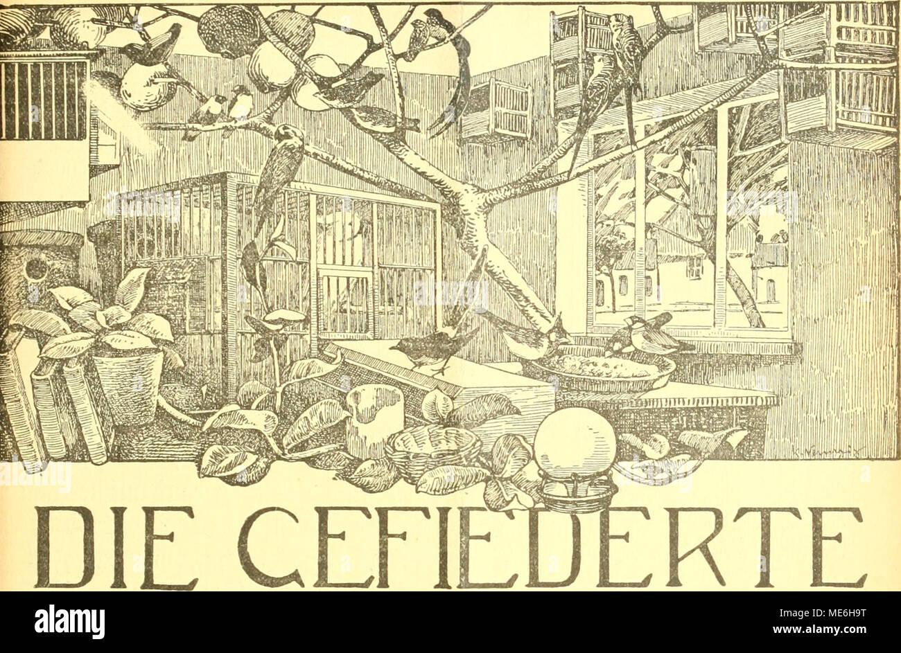 . Die Gefiederte welt . WELT Zeitschrift für .VOGELLIEBHABER. Begründet von Dr. Karl Ruß. Herausgegeben von Karl Neunzig in Hermsdorf bei Berlin. INHALT: Meine Zaunkönige. Von A. Martens, Oberpostassistent, Haspe (Westt.). (Fortsetzung.) Die Mohrenlerche - Alauda tatarica. Von Ingenieur W. kracht. Schattenseiten der Vogelptlege. Plauderei von |. Birk, Lipsia. (Fortsetzung.) Rohrsänger in der Umgebung von Danzig. Von Lothar Qribkowski. Kleine Mitteilungen. - Vogelschutz. - Sprechsaal. - Aus den Vereinen. - Redaktionsbrietkasten. Abonnementspreis vierteljährlich M. 2.60. (6 Nummern mit Abbildun Foto Stock