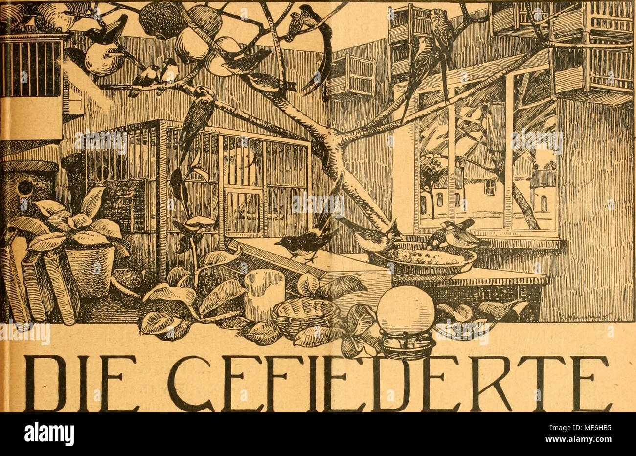 """. Die Gefiederte welt . DIE WELT CEEIE WOCHENSCHRIFT FÜR -VOGELLIEBHABER.- Begründet von Dr. Karl Ruß. Herausgegeben von Karl Neunzig in Hermsdorf bei Berlin. INHALT: Katzensteuer. Von A. Klengel, Meißen. Aus meiner Vogelstube. Rudolf von Neunzig. Gefiederte Findlinge. Von prof. K. H. Diener. (Fortsetzung.) Das Rotkehlehen. Von Wilhelm Limberger, Kassel. Erinnerungen vergangener Zeiten! Planderei """"SU J. Birk, Lipsia. Kleine Mitteilungen. - Vogelschutz. - Sprechsaal. - Aus den Vereinen. Vom Vogelmarkt. - Redaktionsbriefkatten. Abonnementspreis vierteljährlich M. 1.50. (13 Nummern mit Abbildung Foto Stock"""