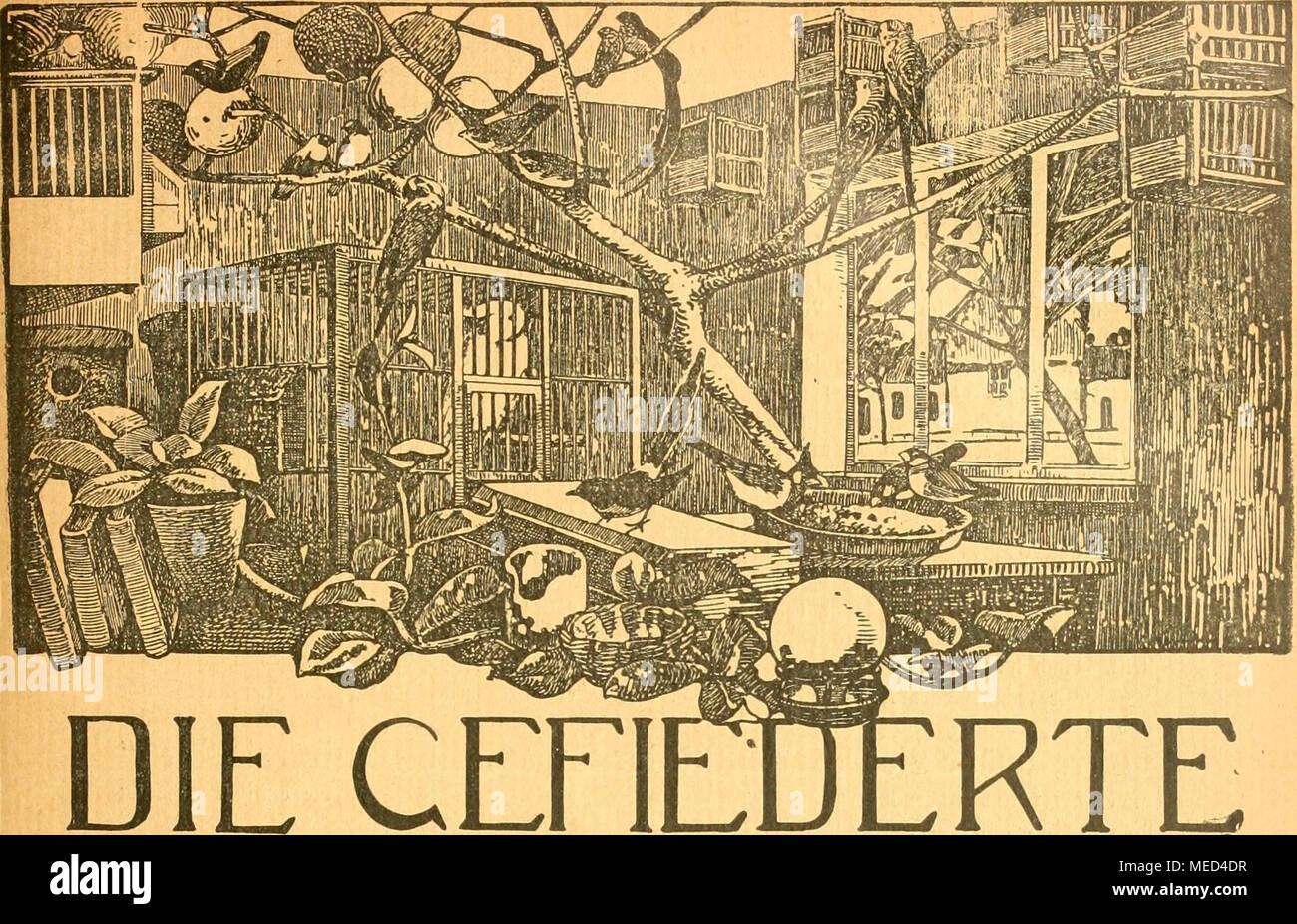 . Die Gefiederte welt . WELT WOCHENSCHRIFT FÜR -VOGELLIEBHABER- Begründet von Dr. Karl Ruß. Herausgegeben von Karl NeunzigJin^'Hermsdorf bei Berlin. INHALT^ Die Wachtel und ihre Pflege. Karl von Finck, Neukölln. Vom blauen Staffelschwanz. Von K. Neunzig. Dompfaffenzüchtung. Von Friedrich Busse, Dessau. Im Freien überwinterte fremdländiche Vögel. Von Stadtarchitekt Pracht. Kleine Mitteilungen. - Vogelschutz. - Sprechsaal. - Aus den Vereinen. Vom Vogelmarkt. - Redaktionsbriefkasten. Abonnementspreis vierteljährlich JW. 1.50. (13 Nummern mit Abbildungen.) (gi^ Jährlich 52 Hefte M. 6.-. Einzelprei Foto Stock